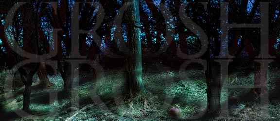 Into the Woods woods at dusk 2 backdrop projection